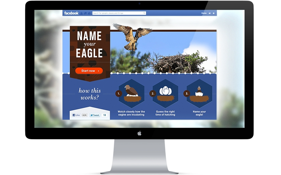 An application to predict the hatching of an eaglet